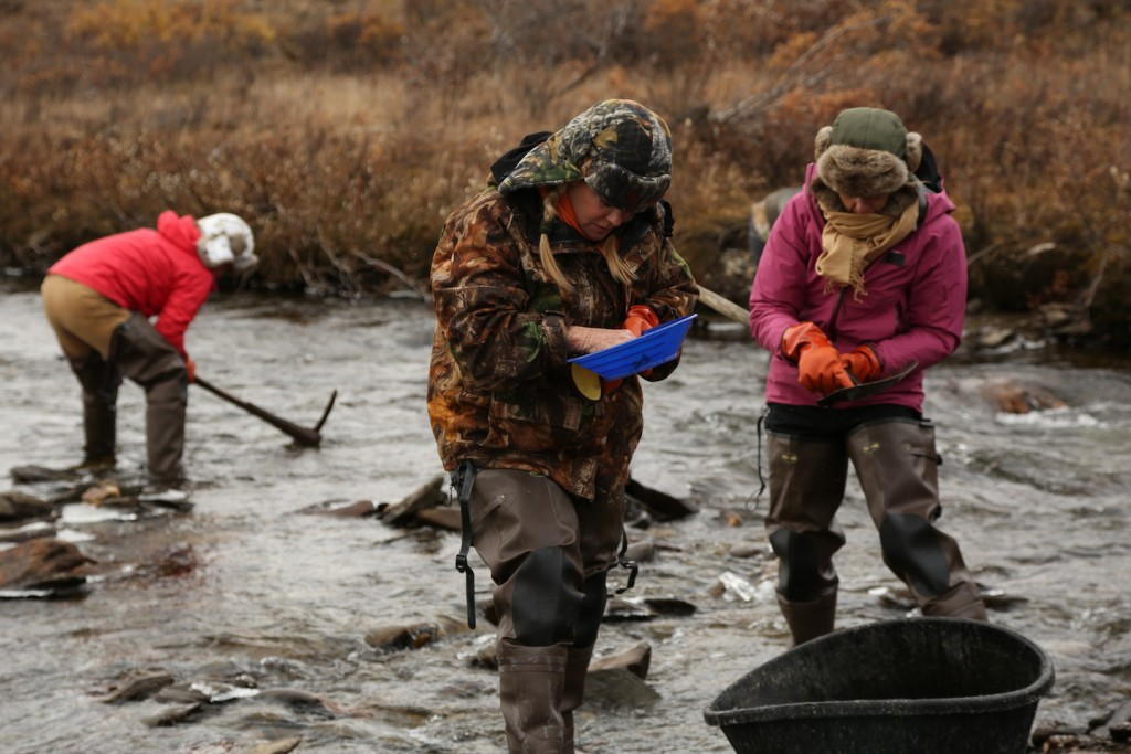 Поиск золота в реке на Аляске
