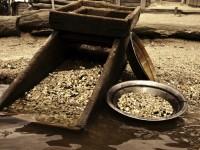 Тонкости золотодобычи